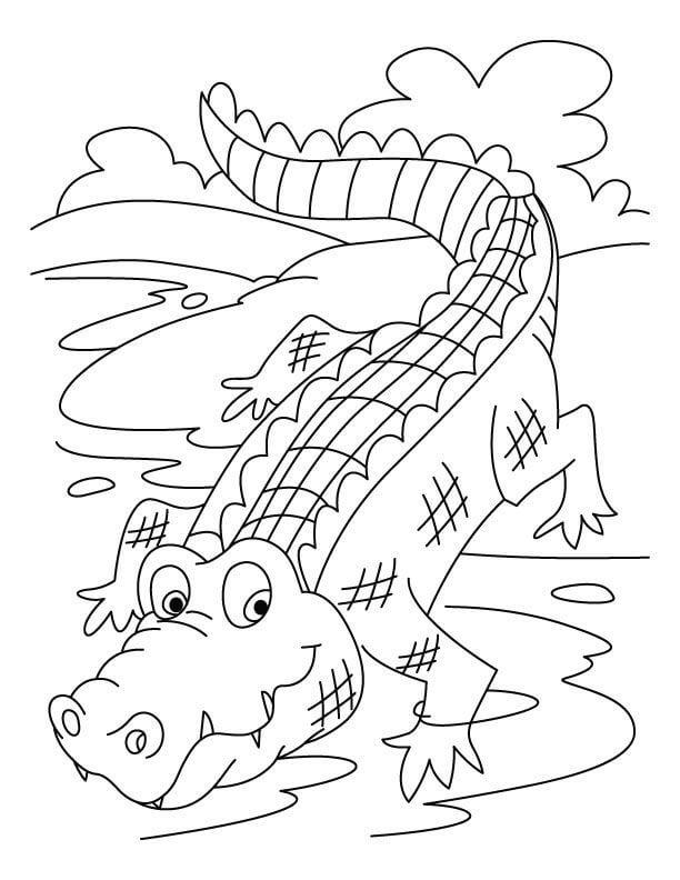 hình cá sấu cho bé tô màu