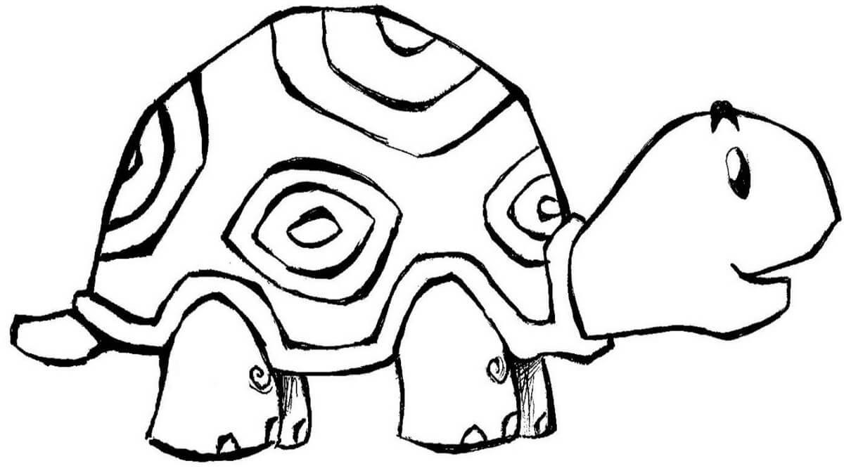 tranh con rùa cho bé tô màu