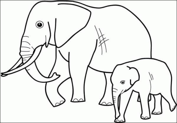 hình tô màu chú voi ở bản đôn cho bé