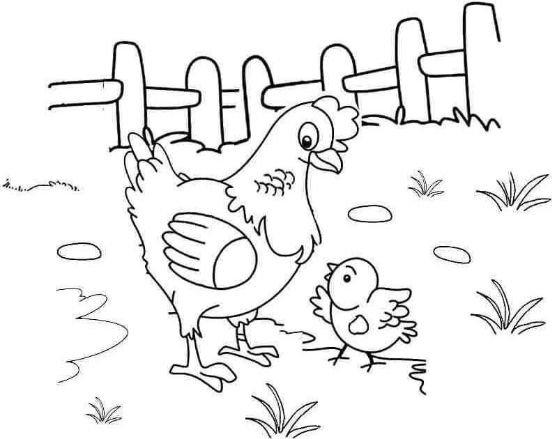tranh tô màu con gà cho bé tập tô
